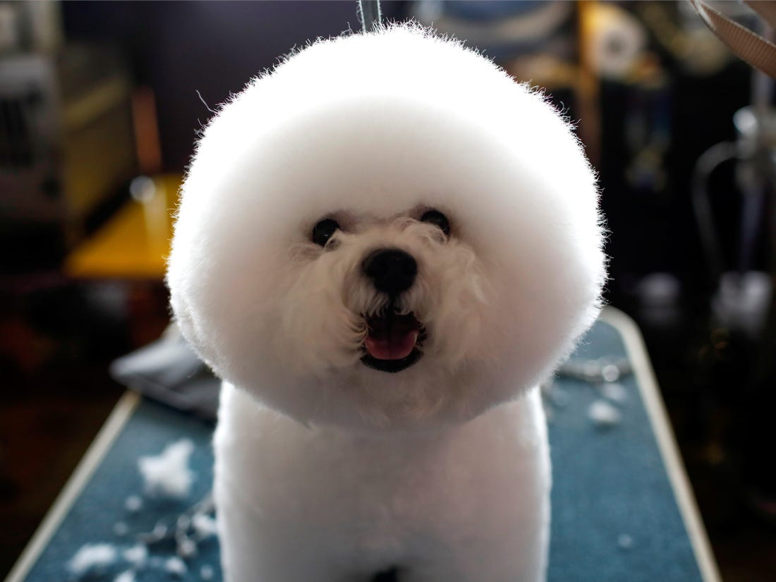 Mobile dog grooming services